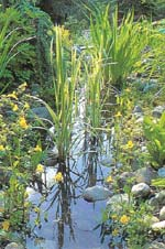 Filtr glebowo – korzeniowy – sposób nazieloną wodę woczku wodnym
