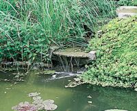 Zielona woda wstawie